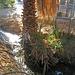 Furnace Creek High Voltage (8588)