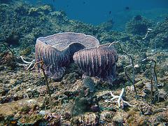 Mug corals