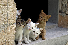 five friends