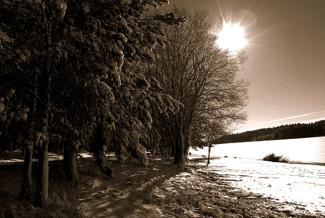 trees & sun (sepia)