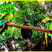 Duo de  perroquets multicolores / Colourful parrots duo - December 29th 2006 / Disneyworld - Modifié avec Microsoft editor.