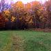 Herbstliche Waldlichtung