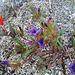 Little Flower In Question (0592)