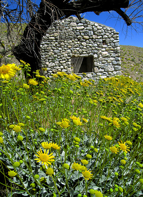 Mission Creek Preserve (0611)