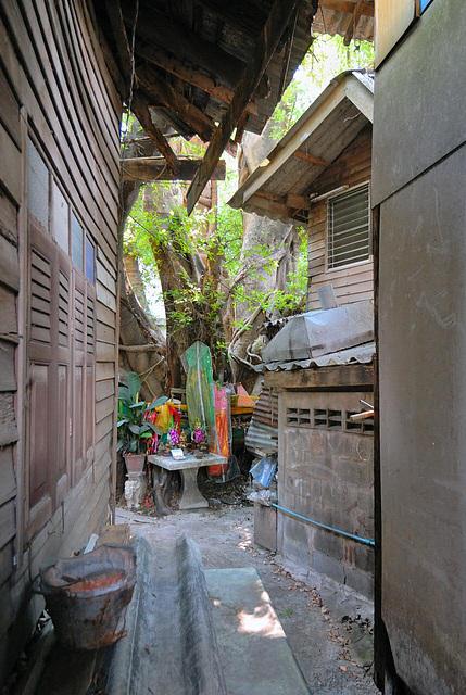San Don Sai a Banyan Tree
