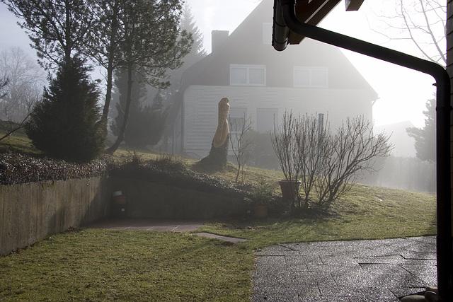 sonnig-nebliger Morgen im Schwarzwald.