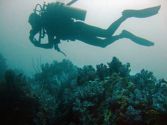 Diving in Burma Mergui Archipelago