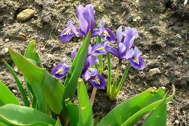 Frühling - endlich 2009