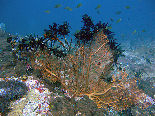 Diving in Burma 31