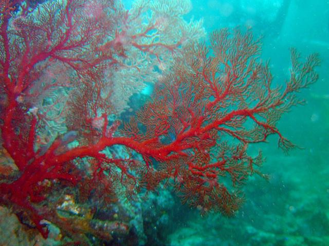 Diving in Burma 24