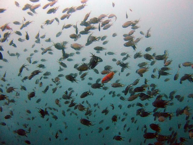 Diving in Burma 23