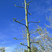 Agave Flower (0258)