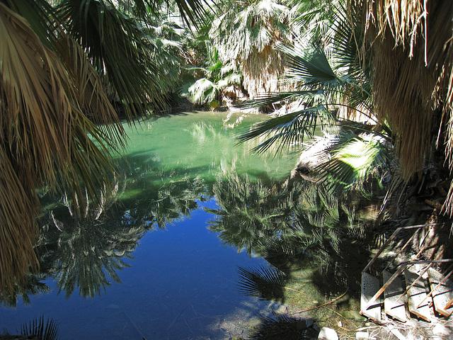 Dos Palmas Fish Pond (0184)