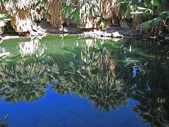 Dos Palmas Fish Pond (0189)