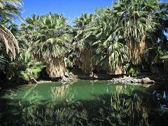 Dos Palmas Fish Pond (0190)