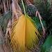 Palm Leaf (0195)