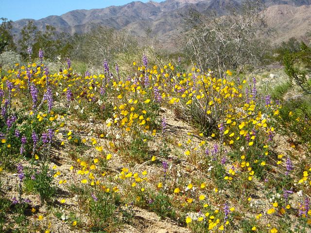 Desert Flowers (1492)