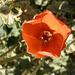 Flower (8995)