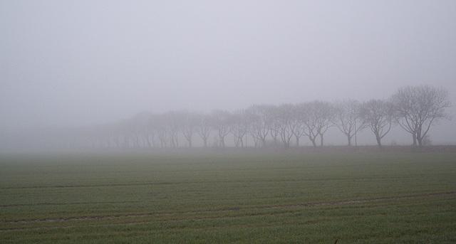 Morgennebel  / nebulous morning