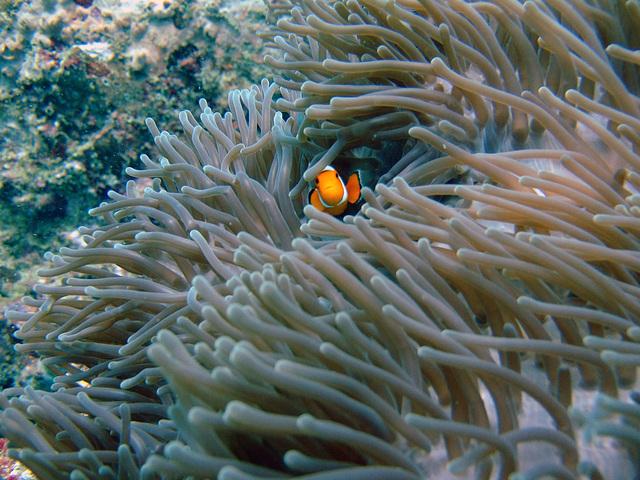 Diving in Burma 92