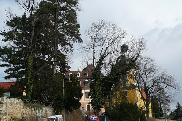 Kamelienblütenschau imBarockschloß Zuschendorf - Pirna