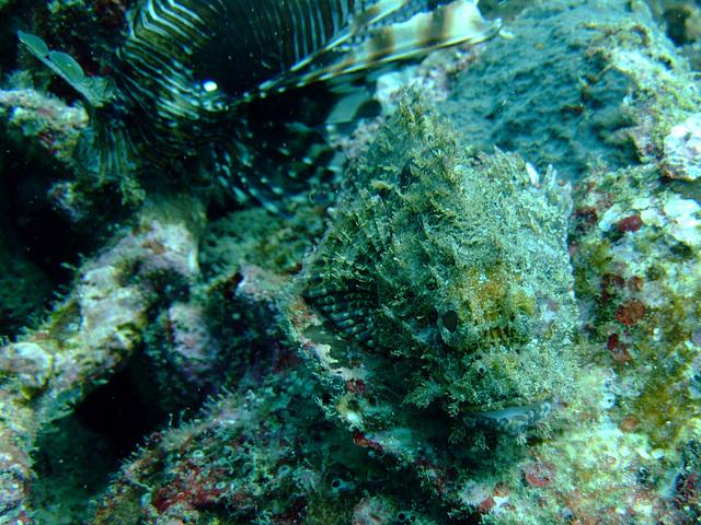 Diving in Burma 90
