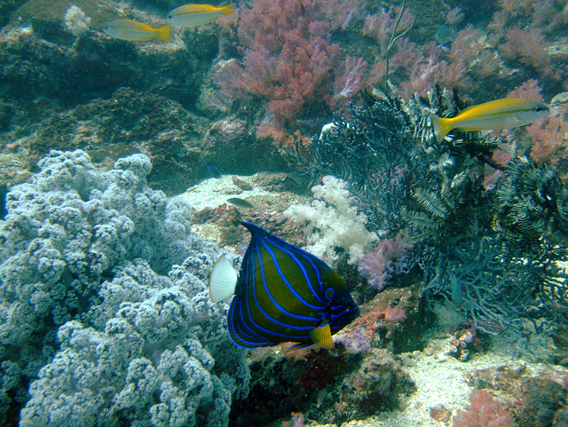 Diving in Burma 88