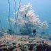 Diving in Burma 86