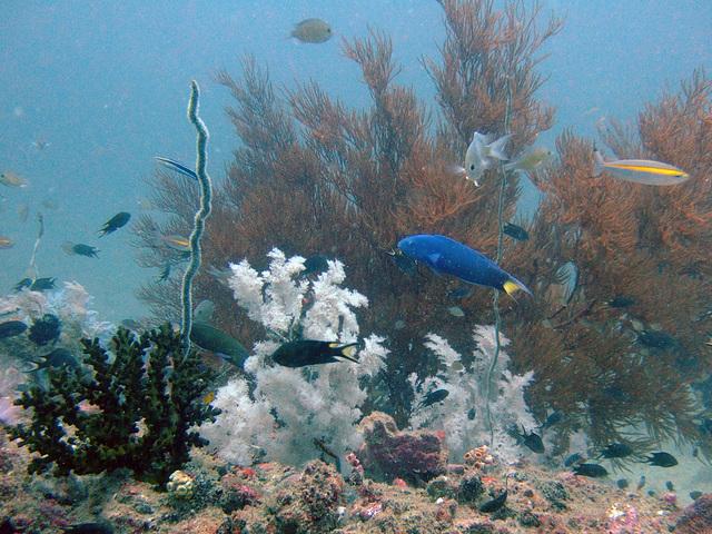 Diving in Burma 84