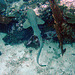 Diving in Burma 79