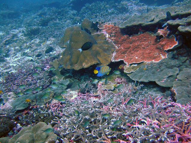 Diving in Burma 73