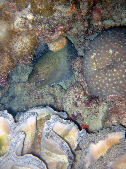 Diving in Burma 72