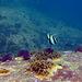Diving in Burma 69