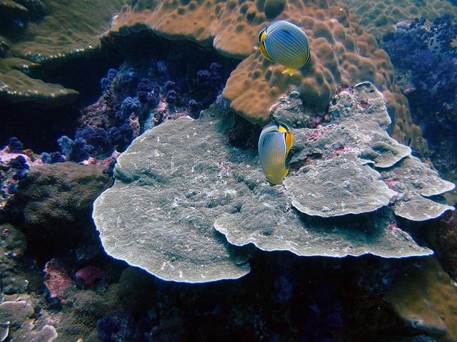 Diving in Burma 67