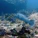 Diving in Burma 66