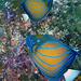Diving in Burma 2004