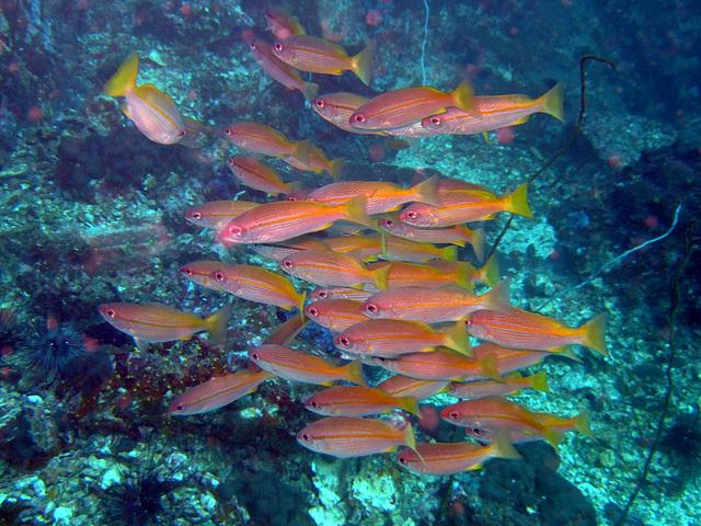 Diving in Burma 63