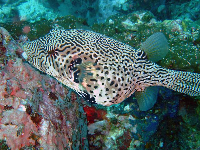 Diving in Burma 61