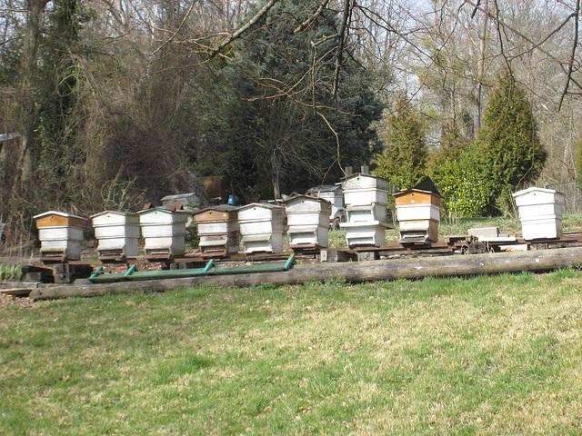 Silence, les abeilles ne sont pas encore éveillées !