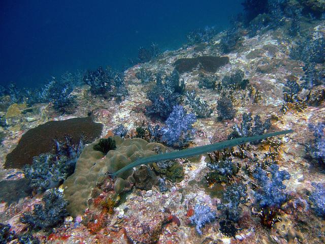 Diving in Burma 57