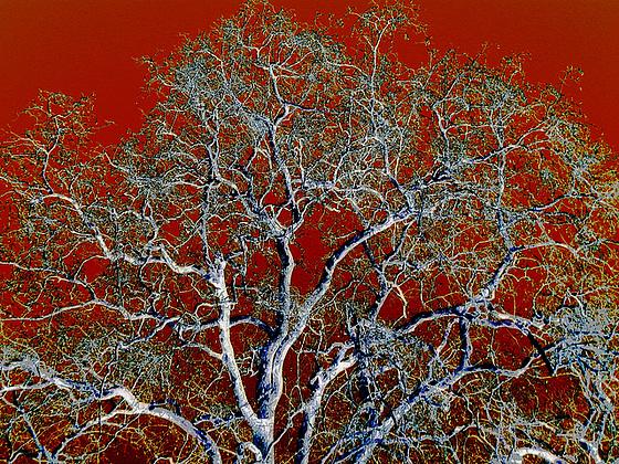 Arborial tracery