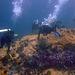 Diving in Burma 41