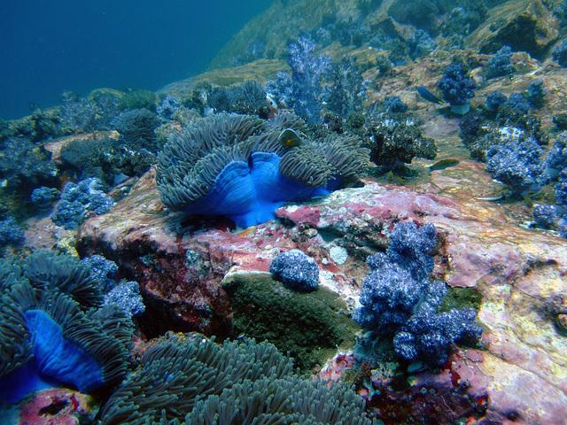 Diving in Burma 39