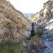 Chuckawalla Bill's Spring (6966)