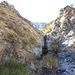 Chuckawalla Bill's Spring (6967)