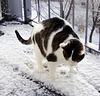 Rocky - einfach von mir in den Schnee gesetzt ;o)