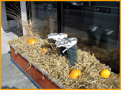 Décoration d'Halloween / Halloween time