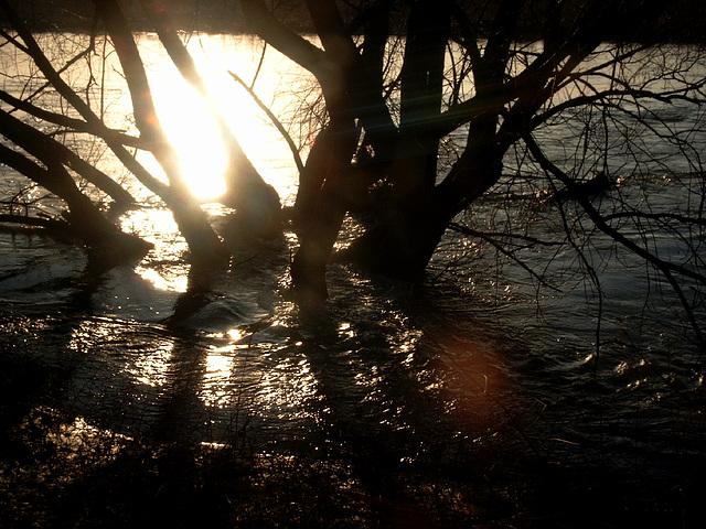 hochwasser -januar