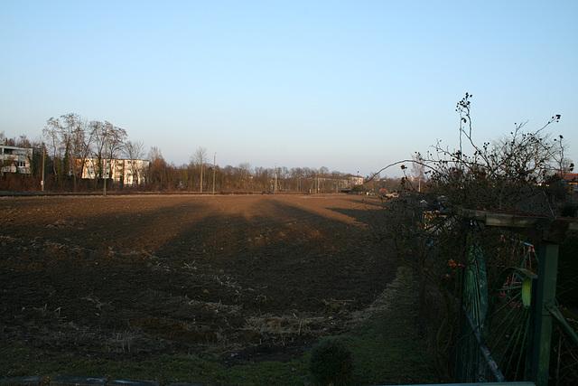 02 cornfield in february