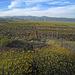Highland Falls Back Fence (0556)